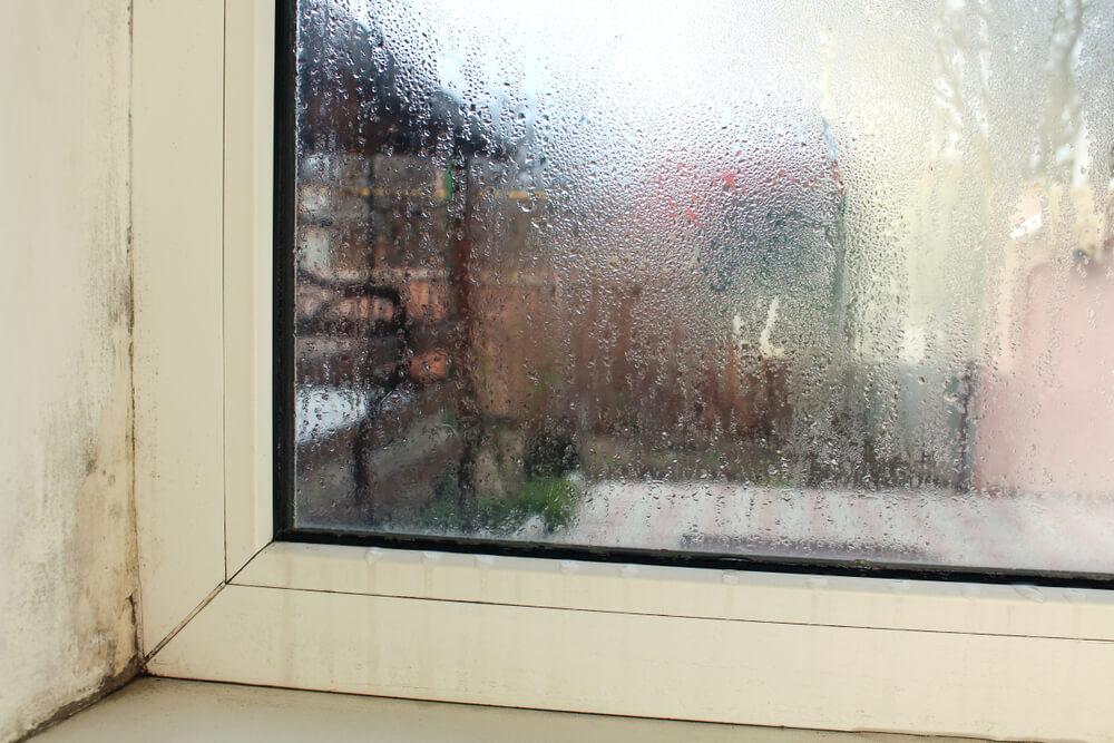 plesn zazwyczaj powstaje przy oknach